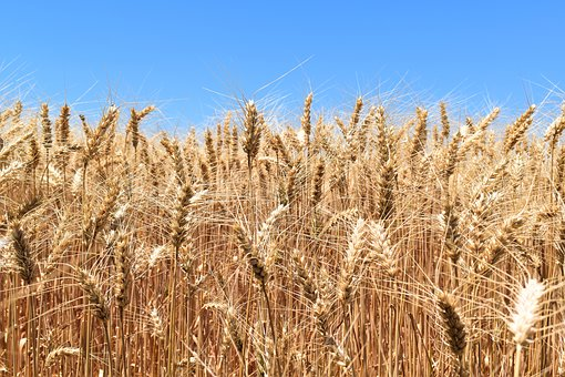 Экспорт и импорт зерновых